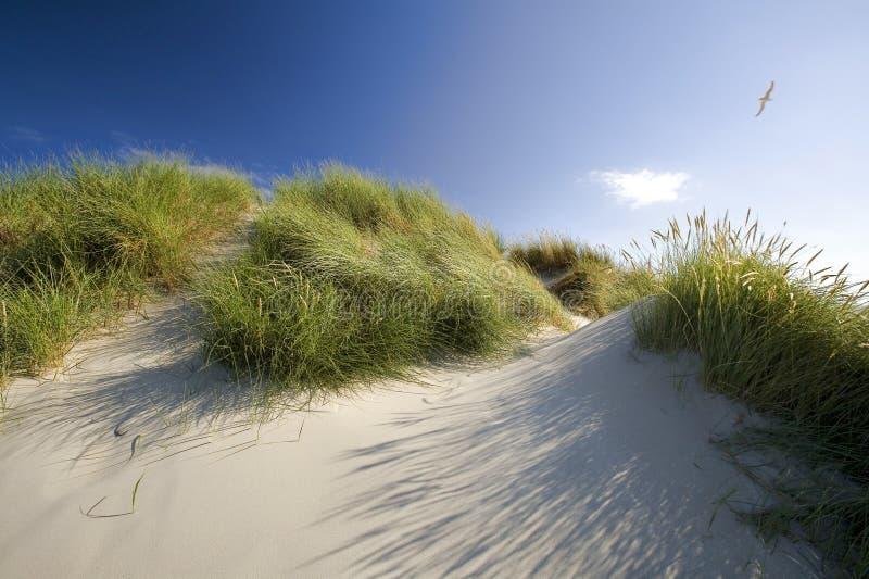 Sand dunes. In the Holland desert