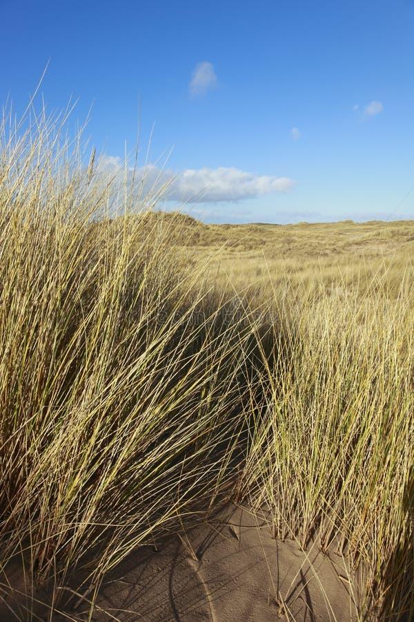 Free Sand Dunes Stock Image - 8194371