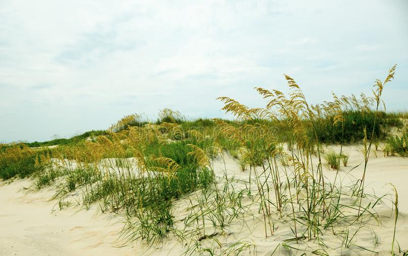 Sand dunes at a beach with grass and cloudy skies royalty free stock image