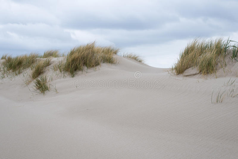 Sand dunes with beachgrass. At the island of Sylt in Germany stock images