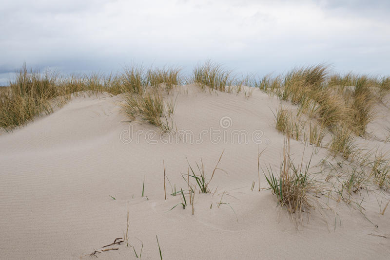 Sand dunes with beachgrass. At the island of Sylt in Germany royalty free stock image