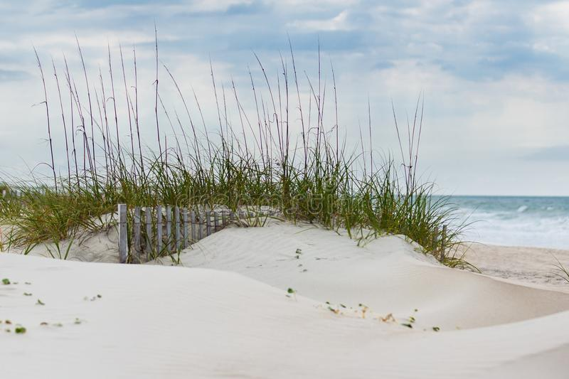 Sand Dunes and Beachgrass. Sand Dunes and American Beachgrass at Emerald Isle in North Carolina royalty free stock photography