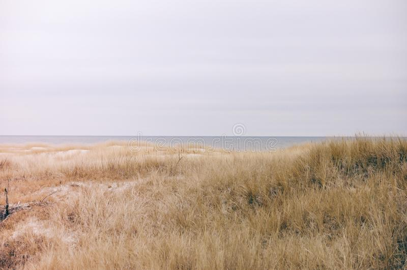Sand dunes with bushes grass on gray sky. Sand dunes on beach with small bushes during summertime weather. Clear pastel gray sky royalty free stock image