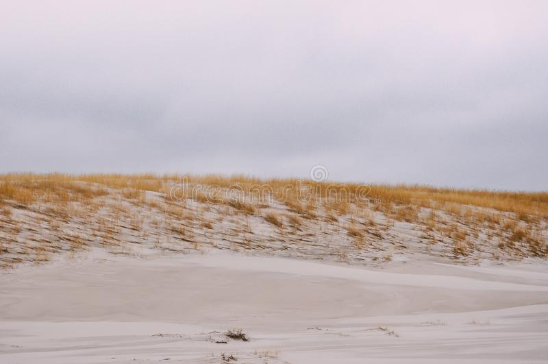 Sand dunes with bushes grass on gray sky. Sand dunes on beach with small bushes during summertime weather. Clear pastel gray sky royalty free stock photo