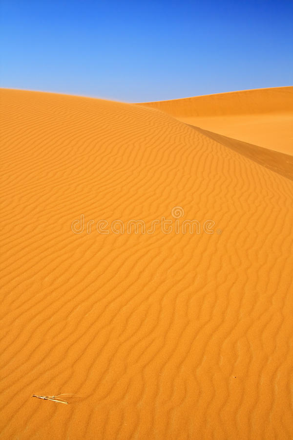 Sand dunes and cloudless blue sky