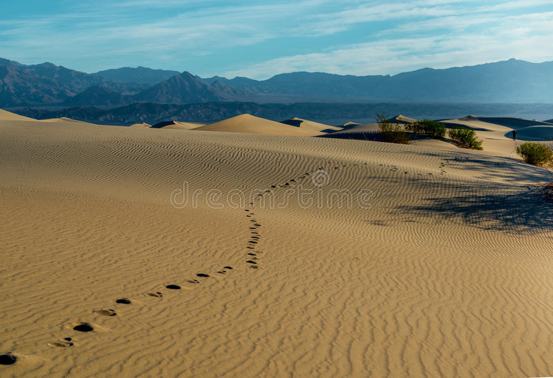 Sand dunes in Death Valley. Mesquite flat sand dunes at sunrise. Death Valley NP, California stock image