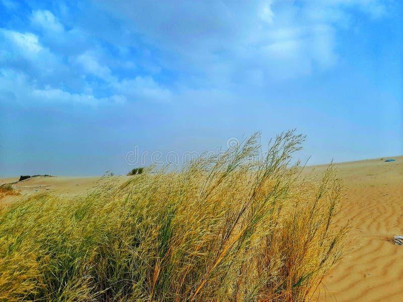 Sand dunes in desert stock photos