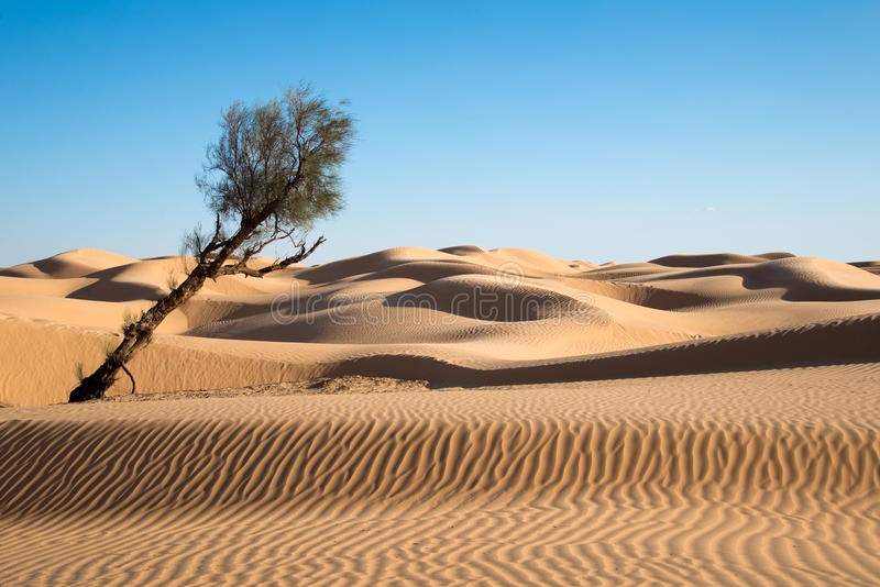 Sand dunes in the desert of Sahara. South Tunisia stock photo