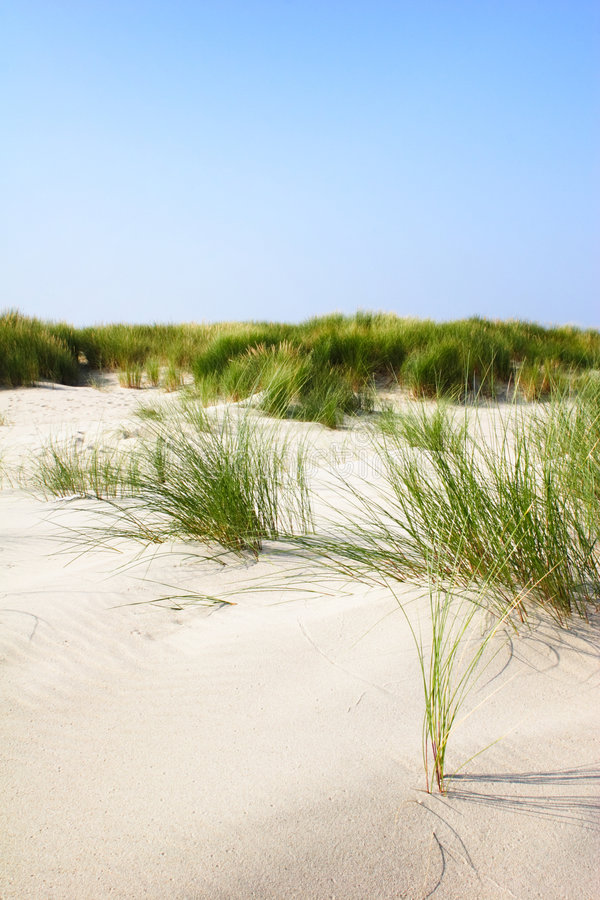 Download Sand Dunes with Grass stock photo. Image of dunes, scenery - 6230196