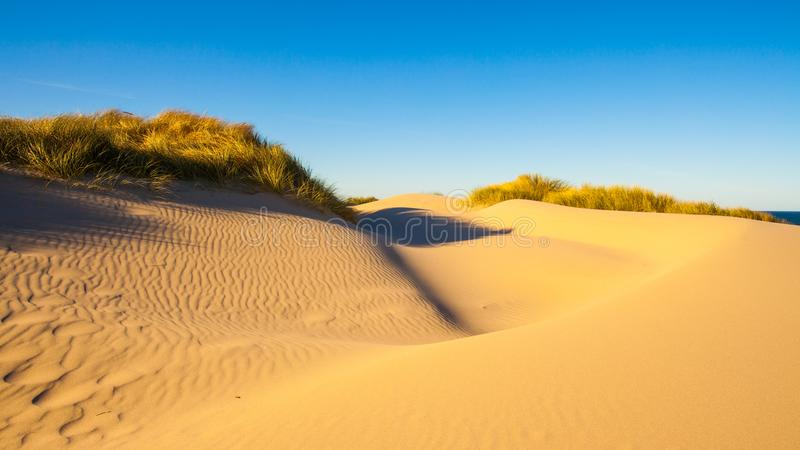 Sand dunes and grasses on a beach royalty free stock photography