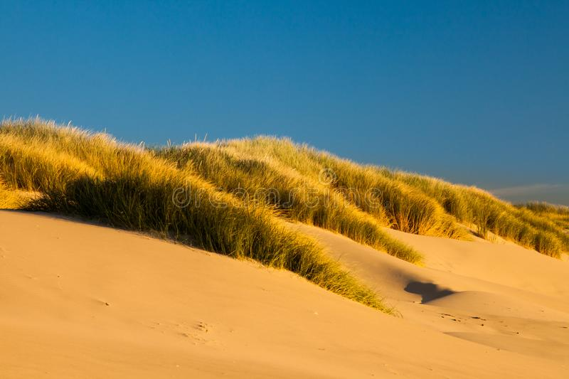 Sand dunes and grasses on a beach royalty free stock photo