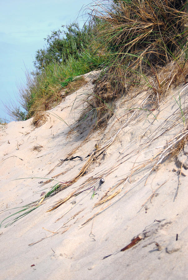 Download Sand Dunes And Green Grass. Stock Photo - Image: 28309350