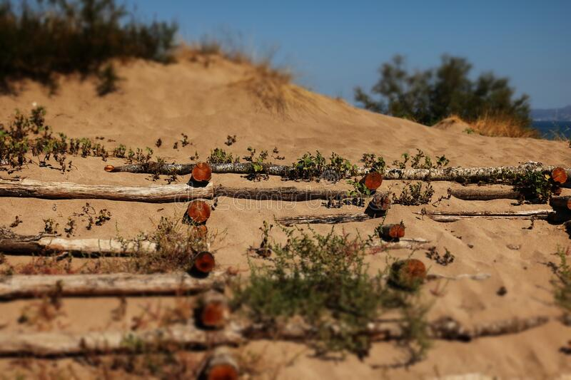 Sand dunes with logs royalty free stock photos