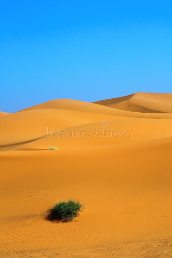 Sand Dunes And A Lonely Tuft Of Grass Royalty Free Stock Images