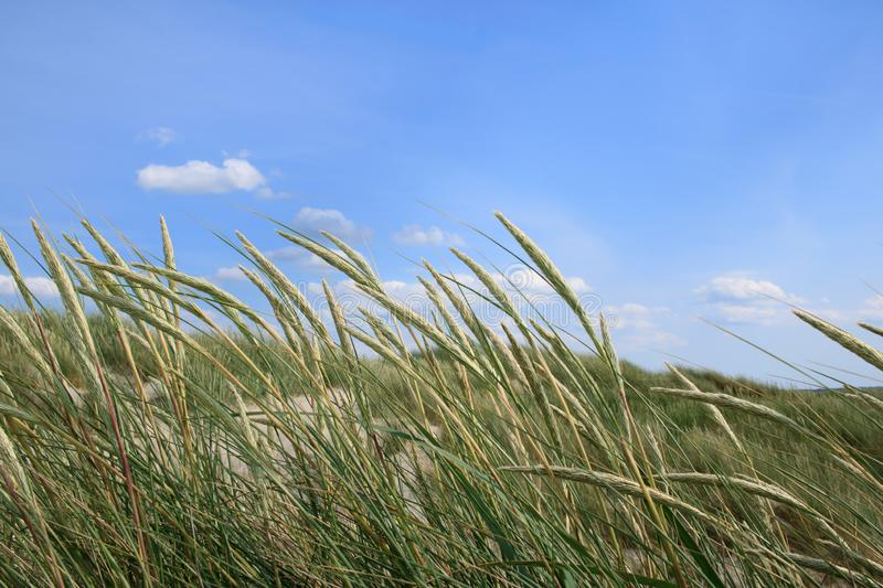 Sand dunes and marram stock photography