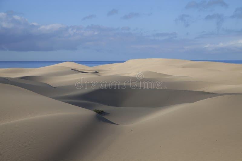 Sand Dunes in Maspalomas royalty free stock image