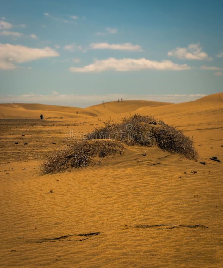Sand dunes. In maspolomas on a summers day royalty free stock image