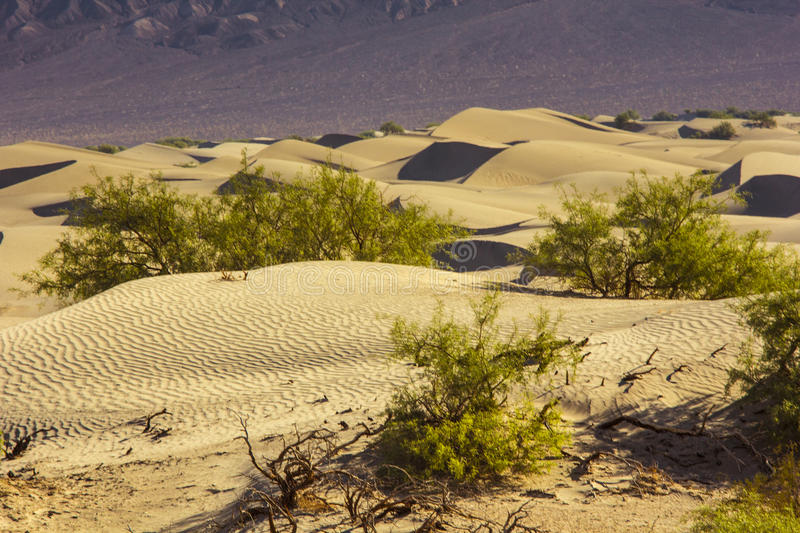 Sand Dunes in the Morning. At Death Valley National Park, California, USA royalty free stock photography