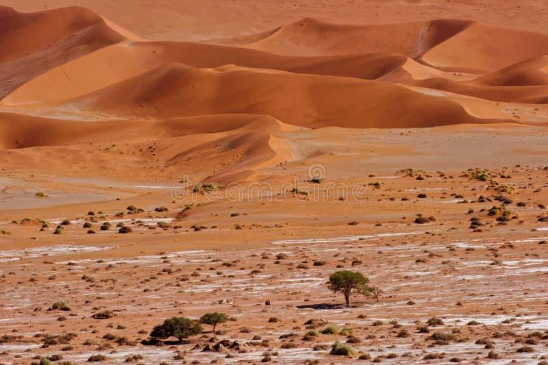Sand dunes of Namib desert, near Sossusvlei, Namibia stock photography