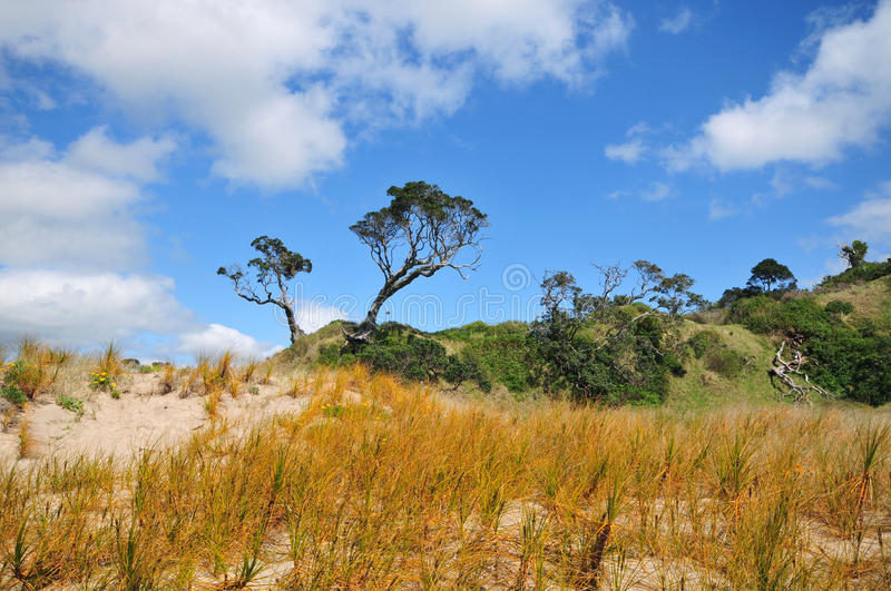 Sand dunes with native vegetation stock photos