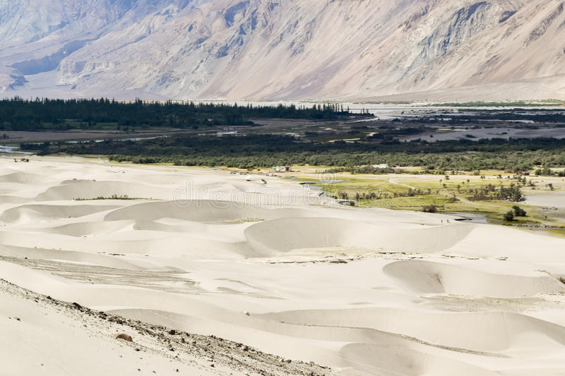 Sand dunes of nubra valley with trees along river bed in background. Nubra valley is high altitude cold desert royalty free stock image