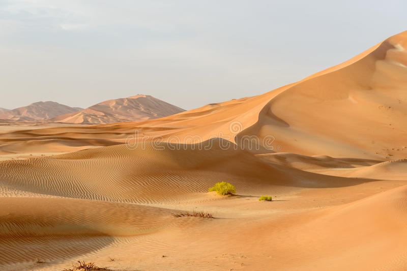 Sand dunes in Oman desert (Oman). Sand dunes in Rub al-Khali desert, Dhofar region (Oman royalty free stock photos