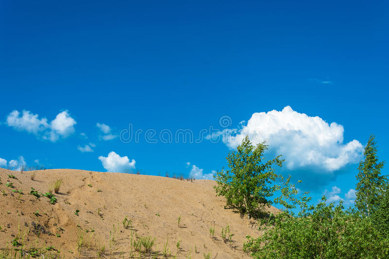 Sand dunes overgrown with young trees and shrubs. royalty free stock images