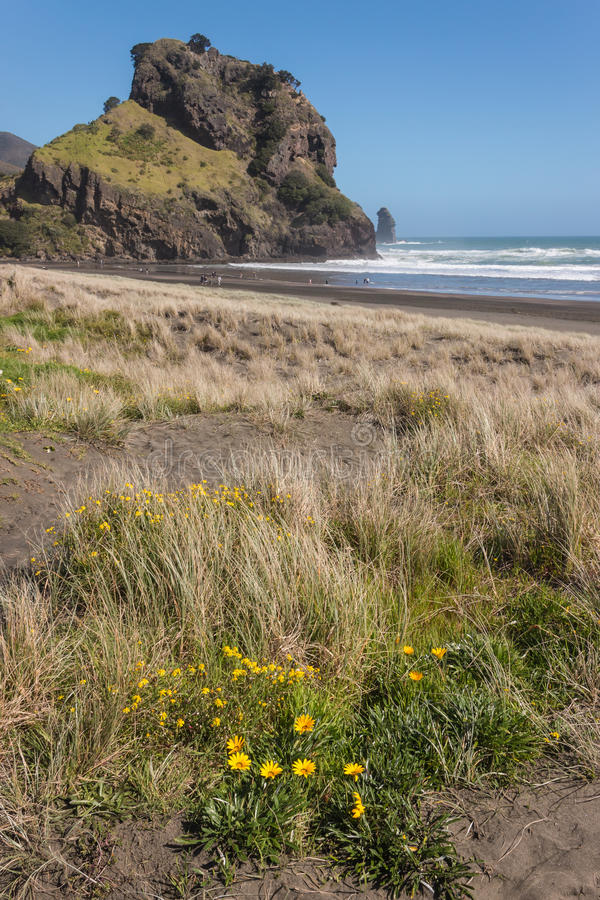 Sand dunes at Piha beach. In New Zealand stock photography