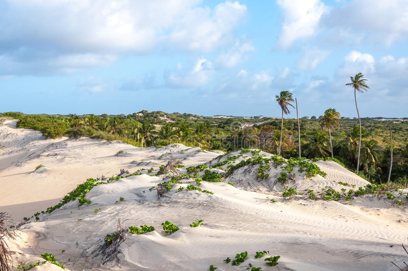 Sand dunes, Pititinga, Natal (Brazil). Sand dunes with palms, Pititinga, Natal (Brazil royalty free stock images