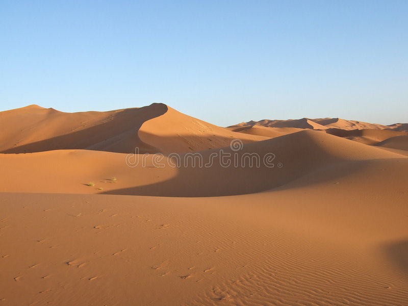 Sand Dunes of Sahara royalty free stock photography