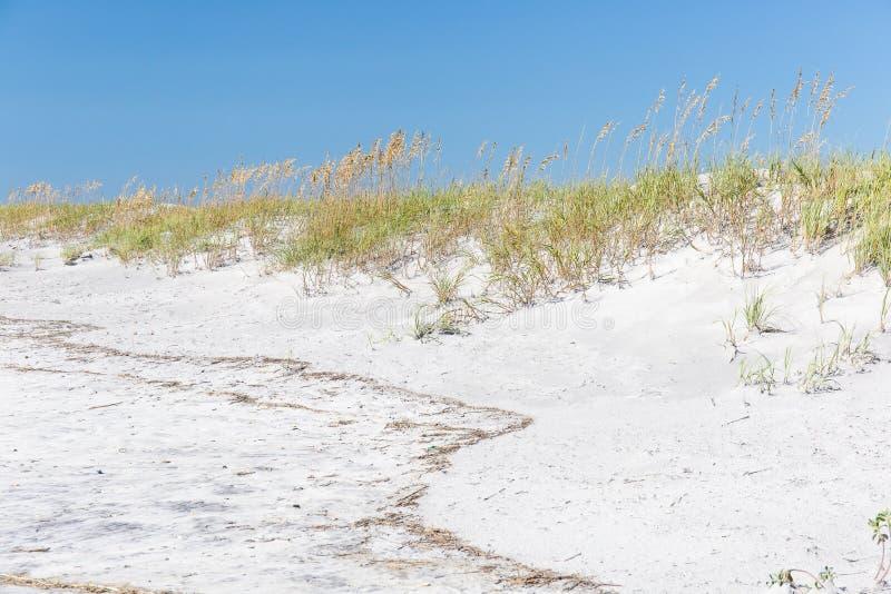 Sand Dunes at Topsail Beach, North Carolina. Sand dunes and sea oats along the beach at Topsail Island, North Carolina royalty free stock images