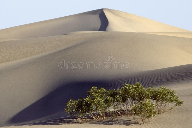 Sand dunes and shrubs in Death Valley stock photography