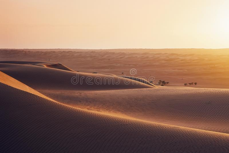 Sand dunes at sunset. Sand dunes in desert landscape at sunset. Wahiba Sands, Sultanate of Oman royalty free stock images