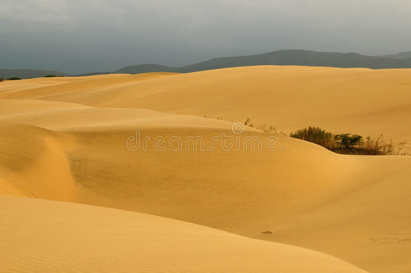 Sand dunes in Venezuela near the city of Coro. Venezuela, magnificent sand dunes can be over 30 meters tall of the Medanos De Coro National Park near the city of stock photo