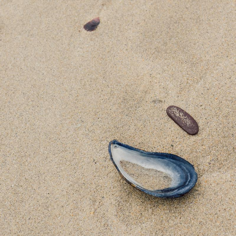 Half a mussel shell and slate pebble embedded in sand royalty free stock images