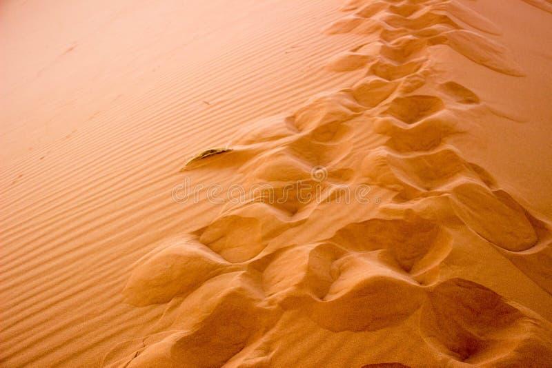 Sand lizenzfreie stockfotografie