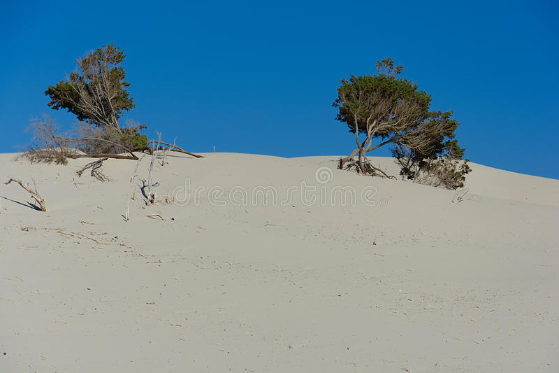Sand och dyn royaltyfri fotografi
