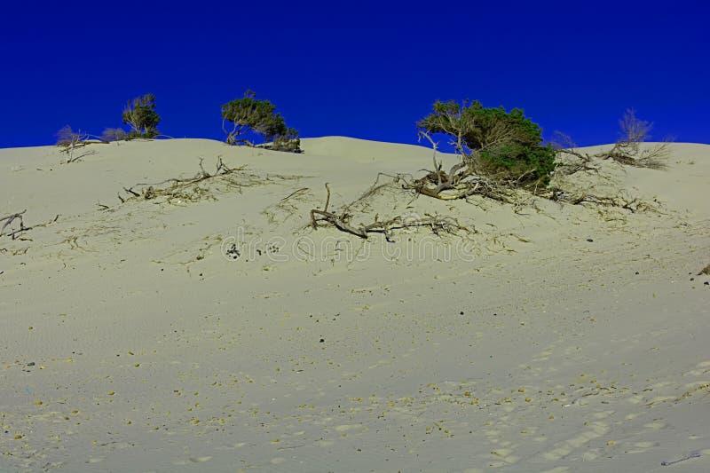 Sand och dyn royaltyfri foto