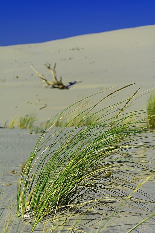 Sand och dyn royaltyfria foton