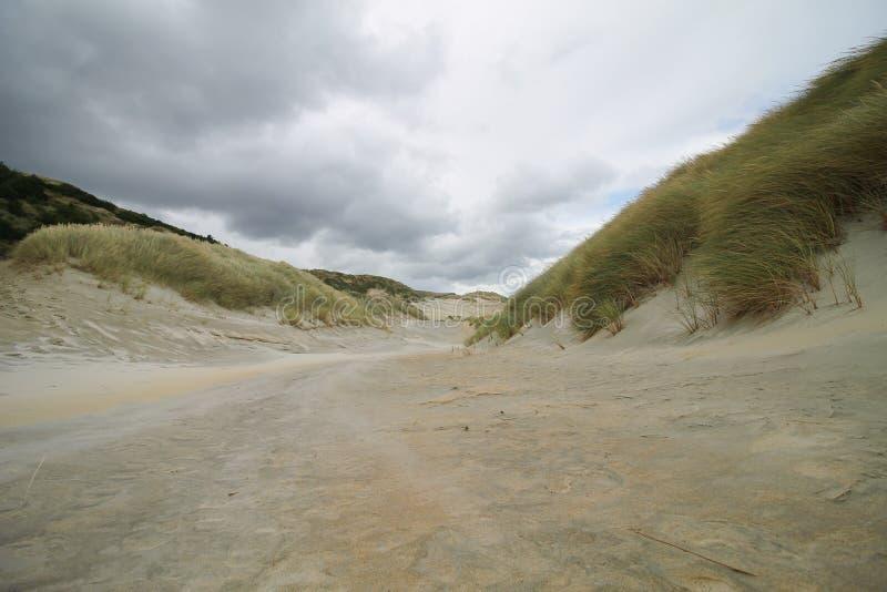 Sand- och gräsdyn på en molnig dag skapar en bakgrunds- och tapetsikt arkivbilder