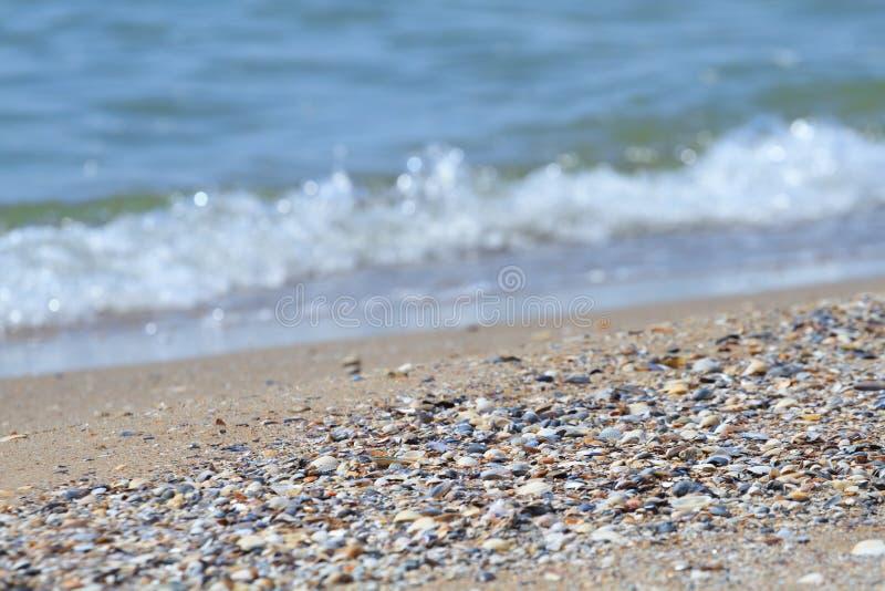 Sand och skal på havet arkivbild