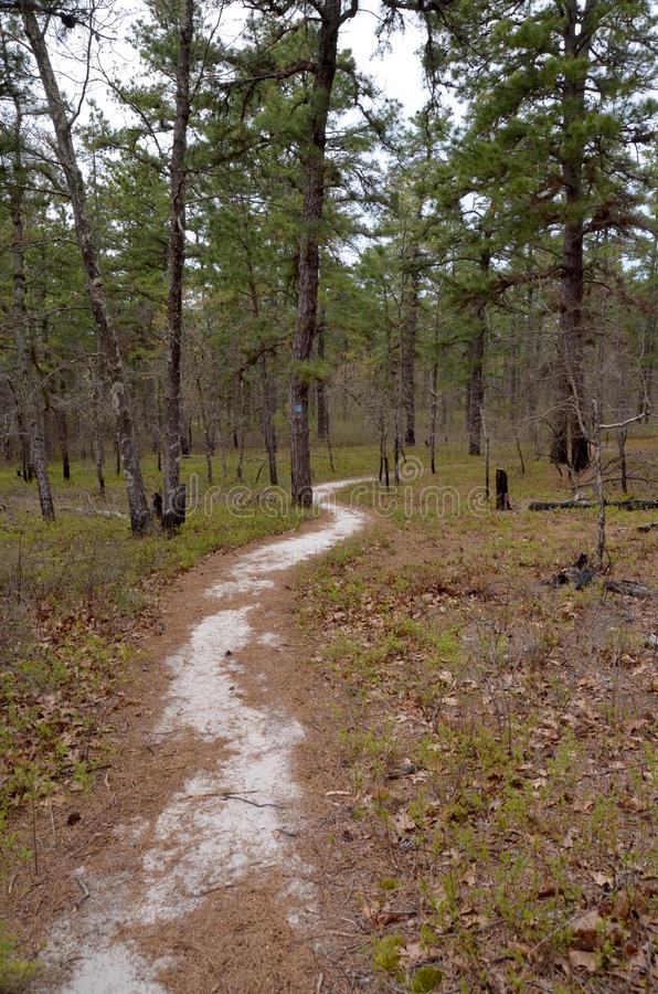 Sand Path in Pines. A sandy path winds like a snake through a pine forest royalty free stock photo