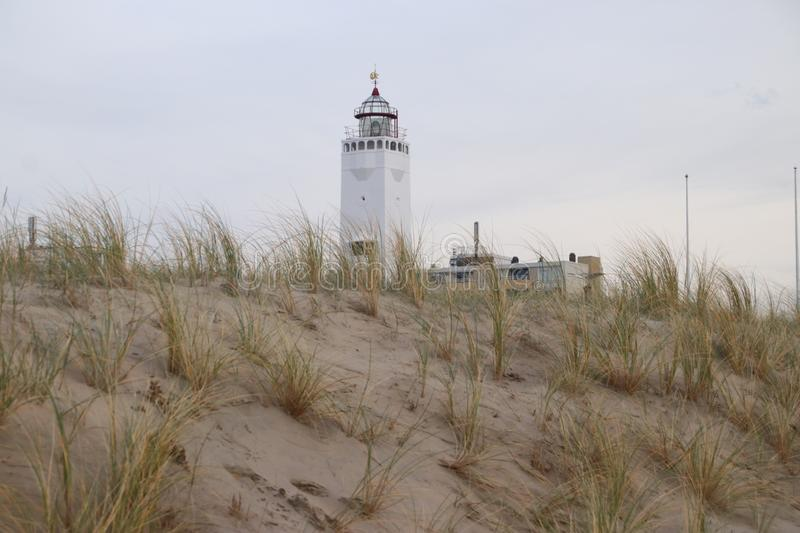 Sand reed at the dunes of Noordwijk in the Netherlands at the North Sea coast with the white lighthouse on the background. royalty free stock image