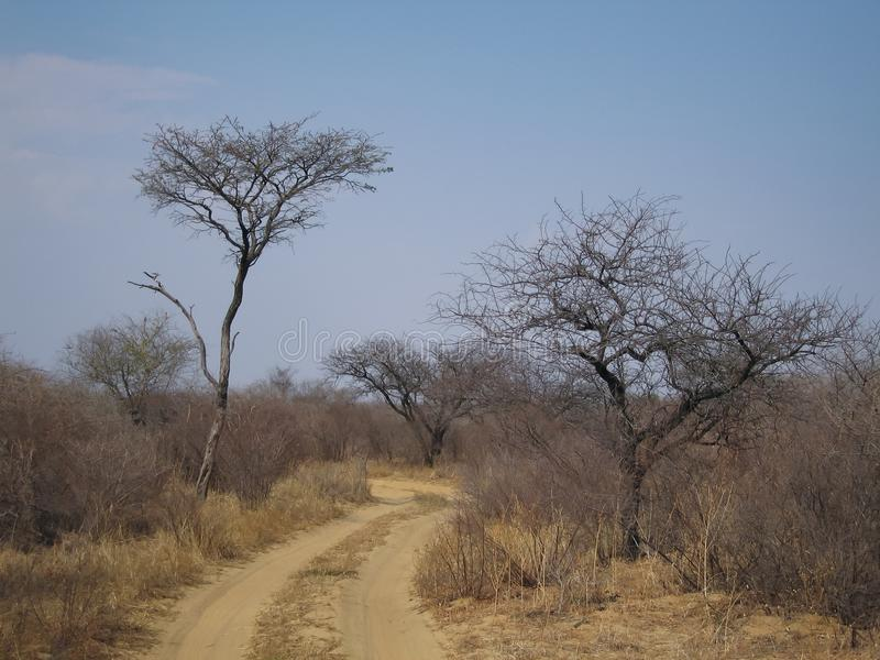 Sand road though african bush under blue sky royalty free stock image