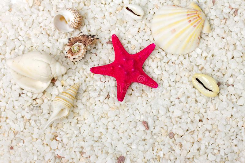 Download Sand And Sea Shells Background. Stock Image - Image of environment, still: 19087165