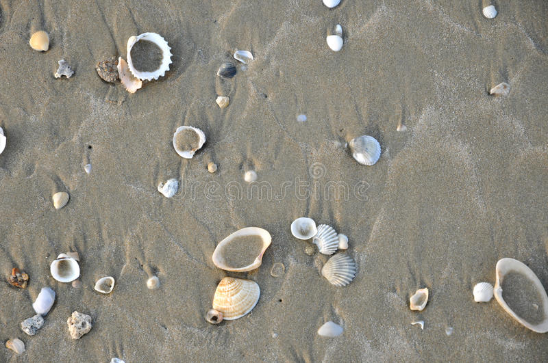 Download Sand with shells stock photo. Image of natural, sand - 19253894