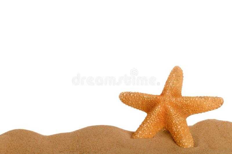 sand sjöstjärnan royaltyfria foton