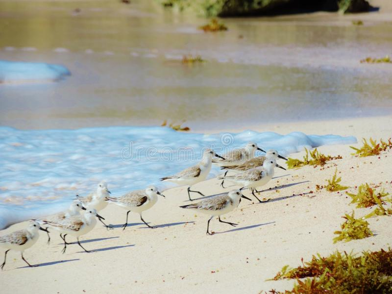 Sand Skitters royalty free stock images