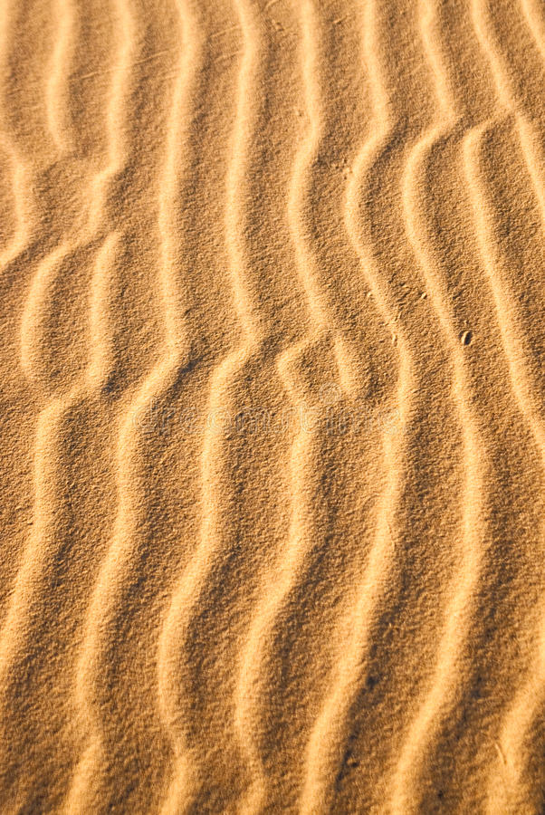 Download Sand Snakes stock image. Image of shapes, wind, shadow - 42148943