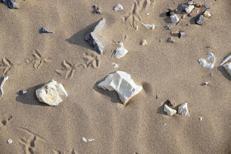 Sand and stones on a beach royalty free stock photography